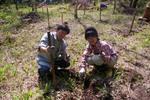 haramura spirng2008-12.jpg
